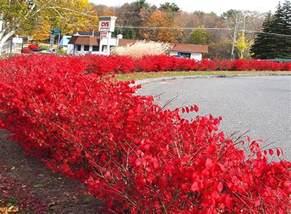 springfield plateau burning bush