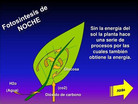 fotosintesis de las plantas la fotosintesis