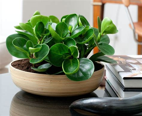 good desk plants 11 of the best plants to have on your coffee table