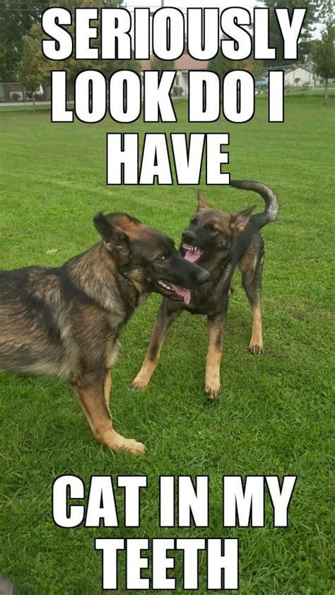 Funny German Memes - german shepherd memes german shepherd dog forums german