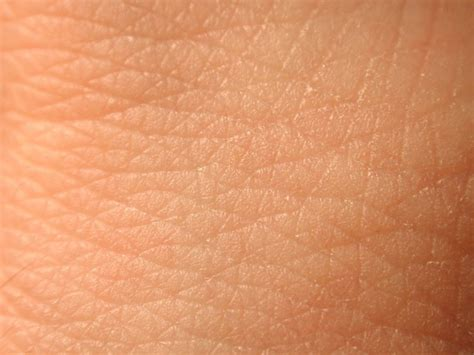 Human Skin Shedding Facts by Opinions On Human Skin
