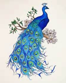 25 best ideas about peacock drawing on pinterest