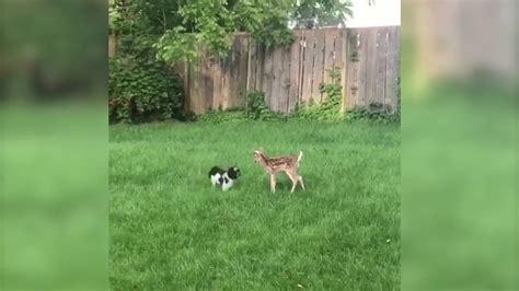 Hund Im Garten Beschäftigen by Der Hund Ist Verwirrt Wegen Des Unerwarteten Besuchs Im Garten Schau Als Sie Aufeinander