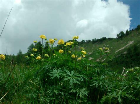 conoscere i fiori conoscere i fiori spontanei della pedemontana grappa