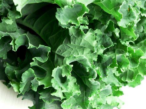 vegetables kale kale a kool cruciferous vegetable nettie cronish
