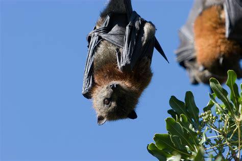 Tree Ground Blind Do Bats Need Maps Wonderopolis