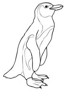 magellanic penguin coloring page african penguin coloring page free printable coloring pages