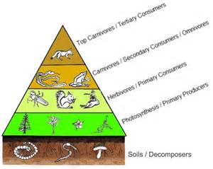 Aldo Leopolds Land Ethic Essay Describes by Understanding Aldo Leopold S Land Pyramid Earthtake