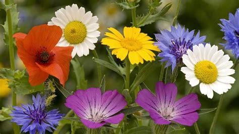 imagenes las flores lenguaje de las flores