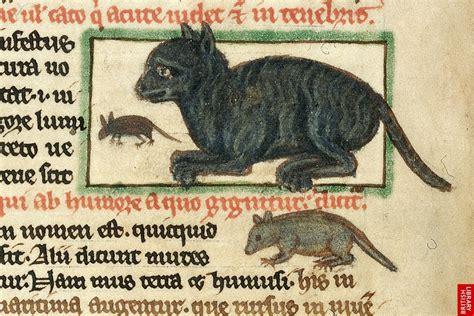 Topi Viii nei secoli fedeli cani e gatti nel medioevo festival