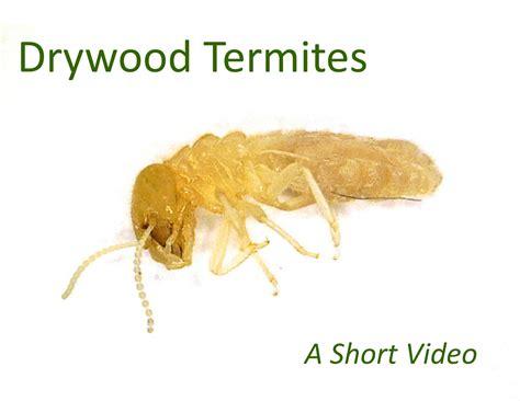 Termite Inspector Houston