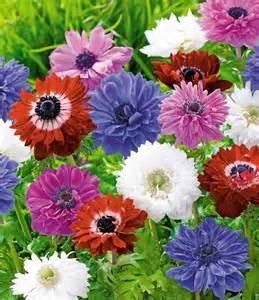 www baldur garten baldur gratis gef 252 llte anemonen sonderartikel bei