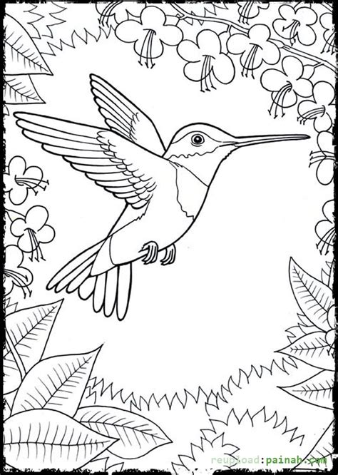 Hummingbird Coloring Page by Hummingbird Coloring Pages To And Print For Free