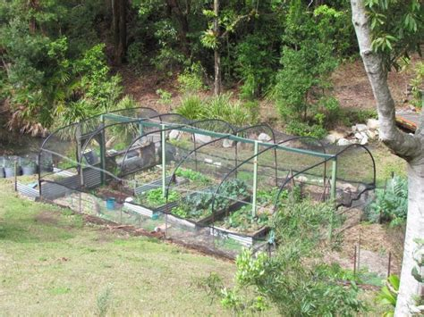 Help Us In Our Orchard And Vegetable Garden In A Vegetable Garden Brisbane