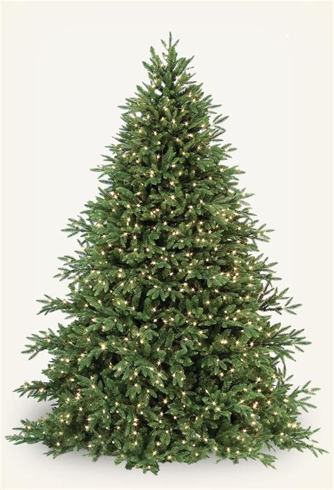 hunter fir christmas tree