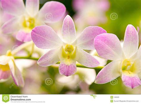 imagenes hermosas de orquideas orqu 237 deas hermosas im 225 genes de archivo libres de regal 237 as