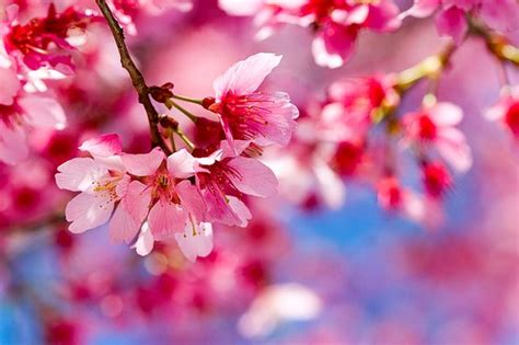 38 stunningly gorgeous spring pictures 38 stunningly gorgeous spring pictures