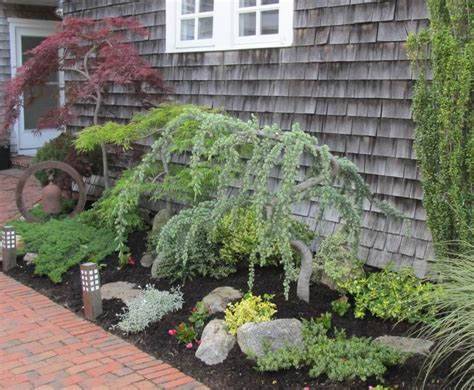 Small Trees To Plant Near House ornamental trees plant is planting