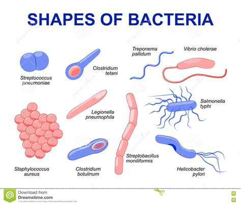 common bacteria infecting human stock vector image 72033790