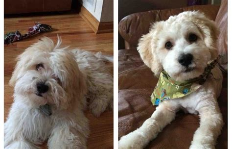 These Before And After Dog Haircut Pictures Are So