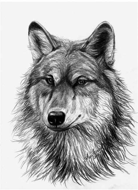 3d Animal Sketch 3 Tx wolf drawing by sheri marean
