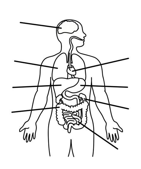 human anatomy coloring page az coloring pages