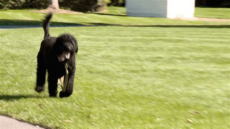 dog house gif the white house running gif find share on giphy