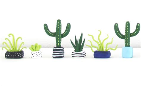 designer boe holders mini plants cacti  succulents