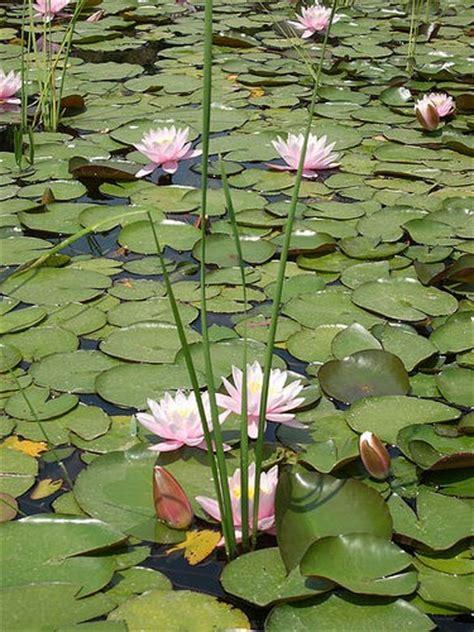 imagenes de flores acuaticas alumnos 4 oja tema 7 las transformaciones en los