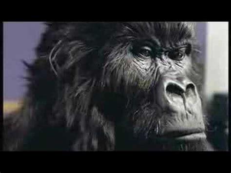 Wonderbra Recreates Cadbury Gorilla Advert For by Cadbury Gorilla Advert In The Air Tonight