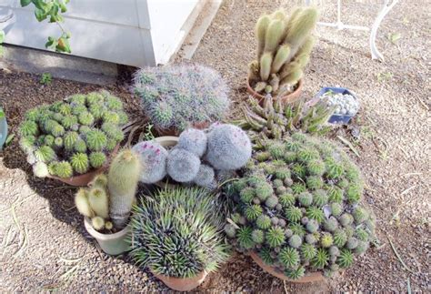 cactus garden ideas 34 sharp cactus garden ideas