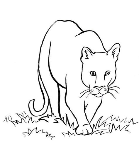 mountain lion coloring page samantha bell