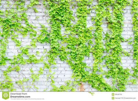 green vines wall www imgkid com the image kid has it