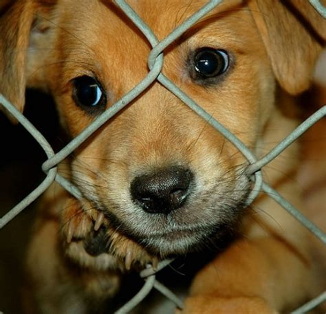 i want to adopt a puppy 6 you need a companion 8 reasons to adopt a pet from a shelter