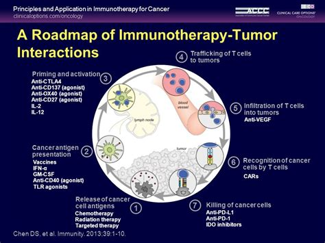 targeting pattern recognition receptors in cancer immunotherapy in partnership with principles and application of