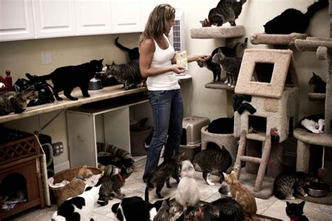science explains why girls went so crazy for the beatles crazy cat lady theory siowfa13 science in our world