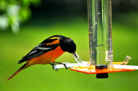 oriole feeder or 1 by peter s feeders this oriole feeder