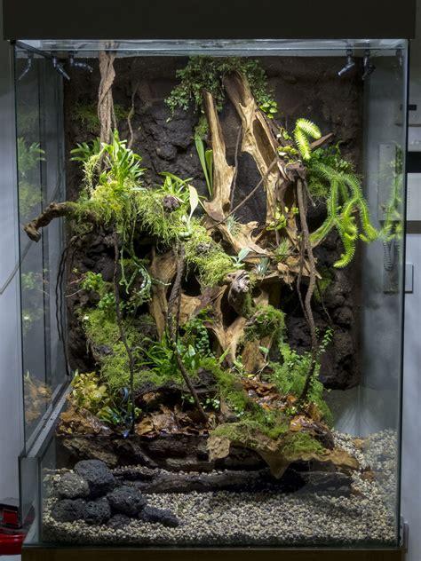 img reptile habitat vivarium reptile terrarium