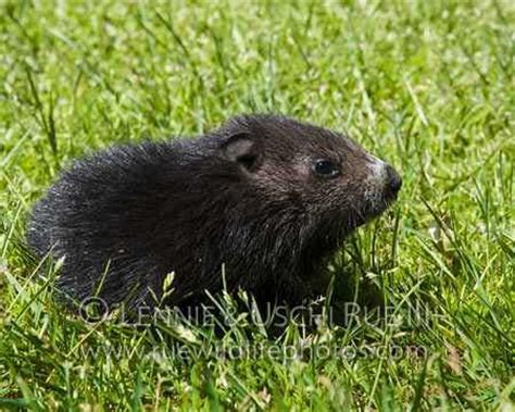 groundhog day for a black groundhog day for a black 28 images the world s