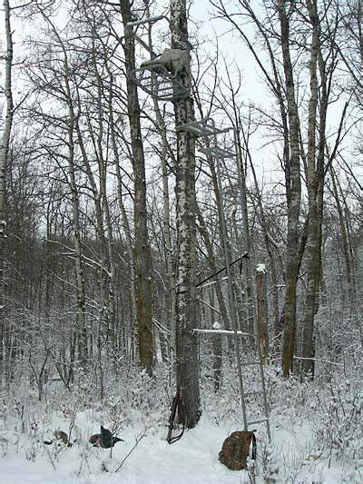 how to set up tree stand experience on a tree stand