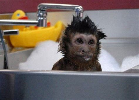 bath time for monkey
