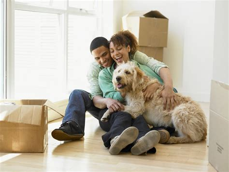Apartments Pet Friendly How To Provide A Comfortable Environment For Your In