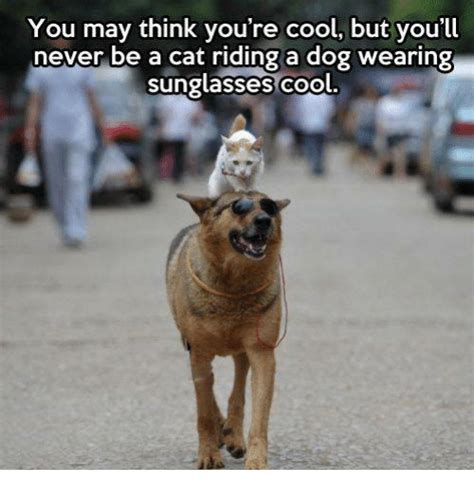 Cool Dog Meme - you may think you re cool but you ll never be a cat riding