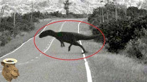 imagenes de zomvis reales 5 dinosaurios captados en c 225 mara y vistos en la vida real