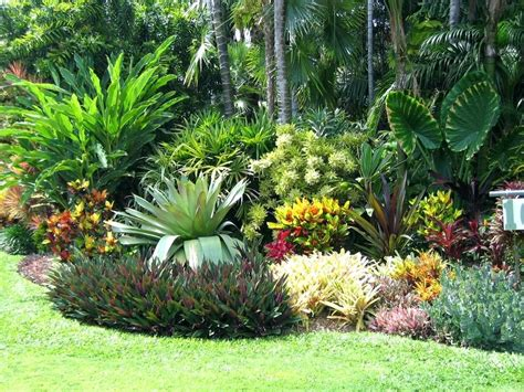 small trees and shrubs for landscaping in front yard hot landscaping florida landscape ideas collection in backyard landscape