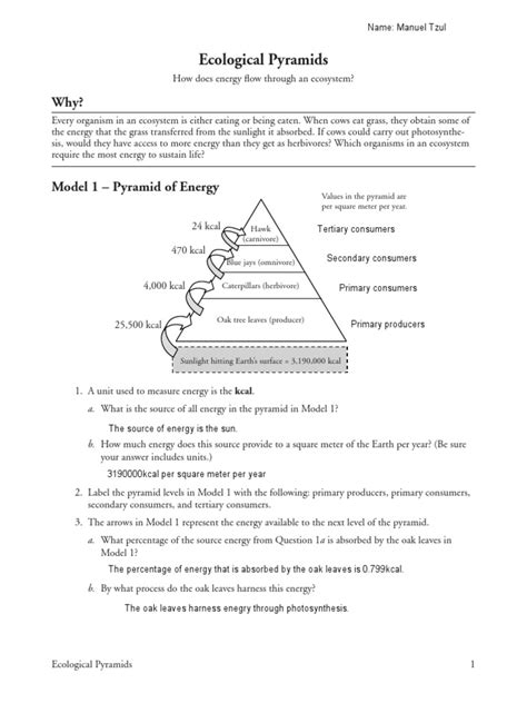 Ecological Pyramids Worksheet Answers by Worksheets Ecological Pyramids Worksheet Atidentity