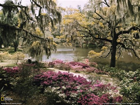 middleton place picture garden wallpaper national