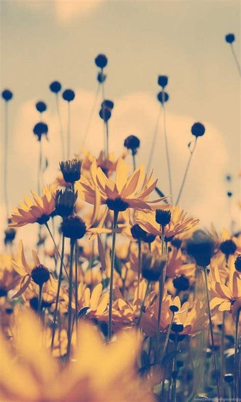 beautiful vintage photography tumblr themes desktop background