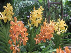 Tropical Indoor House Plants - the national orchid garden at singapore botanic gardens anysomewhere