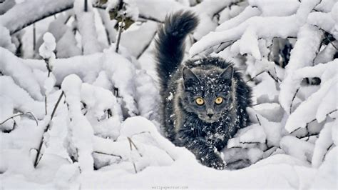 animals in the winter image gallery winter kittens